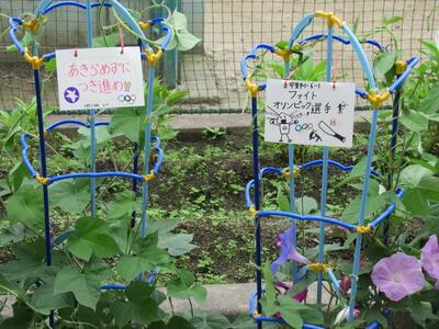 福島県 アサガオ 東京五輪 枯れる 朝顔 子供 オリンピックに関連した画像-03