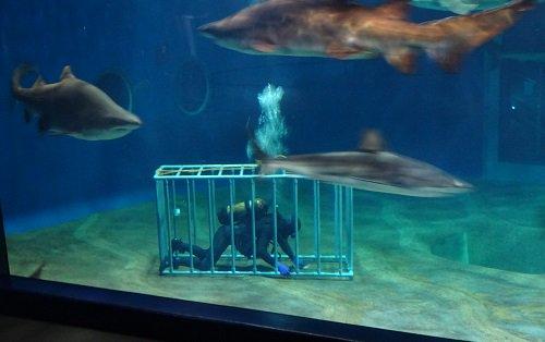 サメ水槽 掃除 危険に関連した画像-02