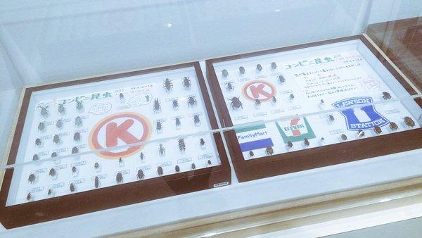 虫 コンビニ サークルK 自由研究 中学生 LED ファミマに関連した画像-03