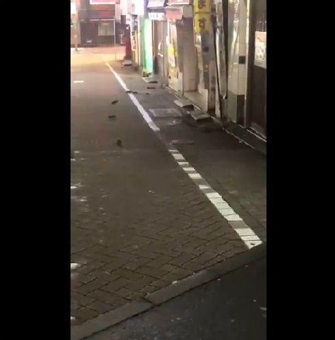 渋谷 ネズミ 大量発生に関連した画像-03