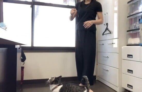 蹴り解説動画 猫乱入 癒やしに関連した画像-03