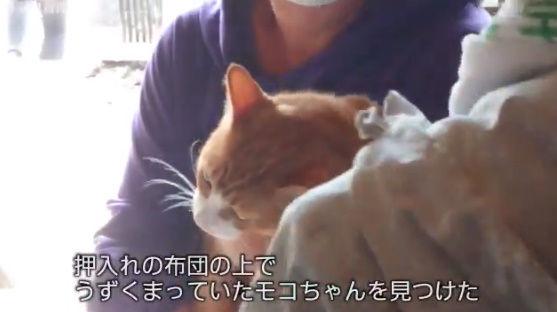 台風19号 猫 行方不明 再開 動画に関連した画像-08