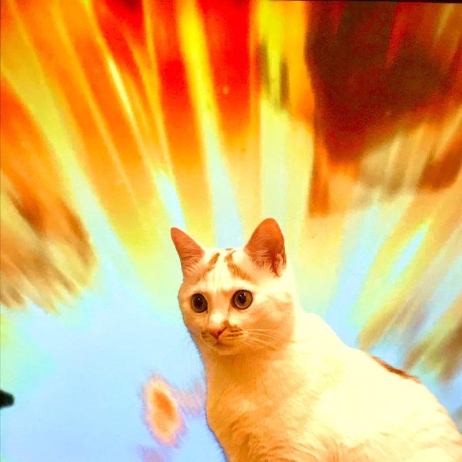 ネコ 進撃の巨人に関連した画像-03