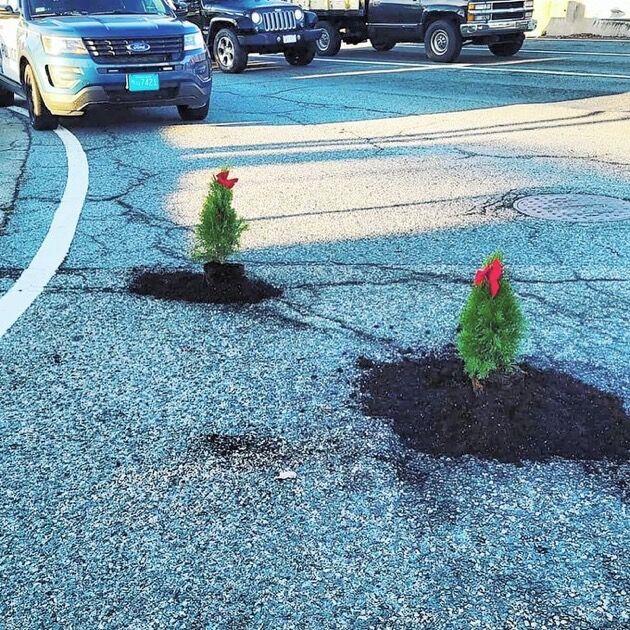 男 車道 クリスマスツリー 植える 事件 衝撃 理由 素敵に関連した画像-03