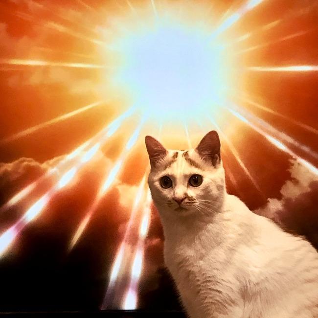 ネコ 進撃の巨人に関連した画像-02