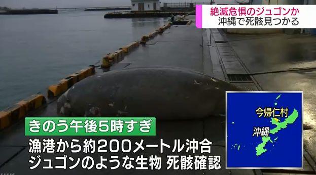 沖縄 辺野古 ジュゴン 死因 エイ 埋め立て 捏造に関連した画像-01
