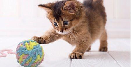 猫 毛糸玉に関連した画像-01