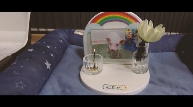 100日目に食われるブタ YouTube チャンネル 100日後 食べる 丸焼き 動画に関連した画像-05