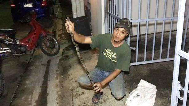 トイレ ニシキヘビ 男性 股間 噛まれるに関連した画像-04