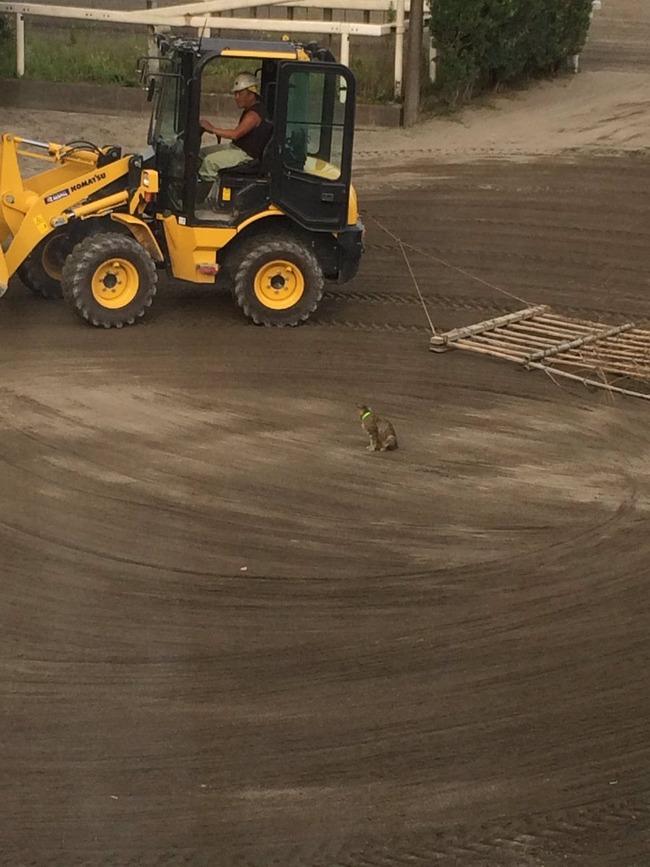 猫 邪魔 トラクター ハロー掛け 優しいおじさんに関連した画像-02