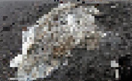 未確認生物 未知 ロイター通信 ロシア 海岸 漂着に関連した画像-01