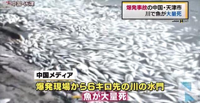 中国 魚 大量死に関連した画像-01