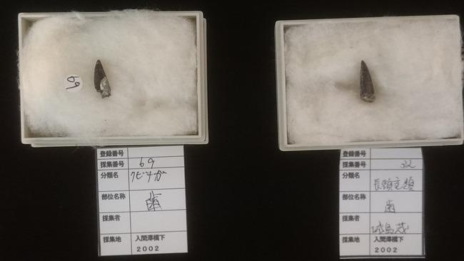 TOKIO 鉄腕ダッシュ クビナガリュウ 化石 福島に関連した画像-02
