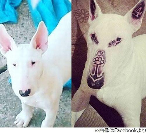 ペット タトゥー 炎上 犬 ブラジル 批判に関連した画像-01