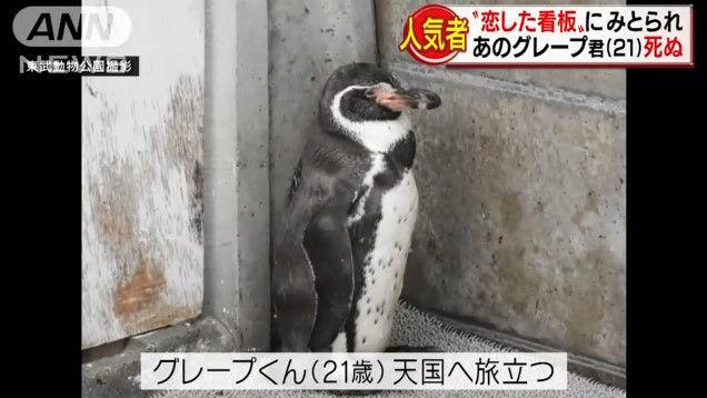 けものフレンズ けもフレ 東武動物公園 グレープ フルルに関連した画像-09