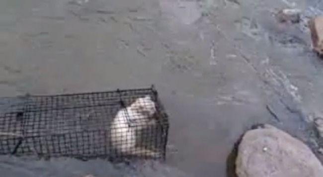 動物虐待 ネコ ニコ生 生主に関連した画像-01