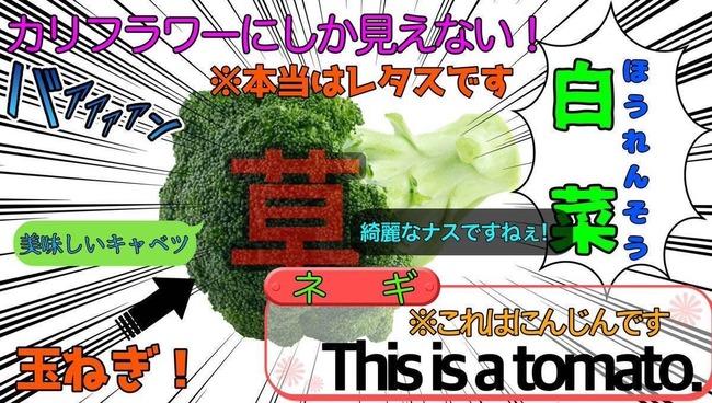 ナスとブロッコリーのトマト 情報量に関連した画像-01