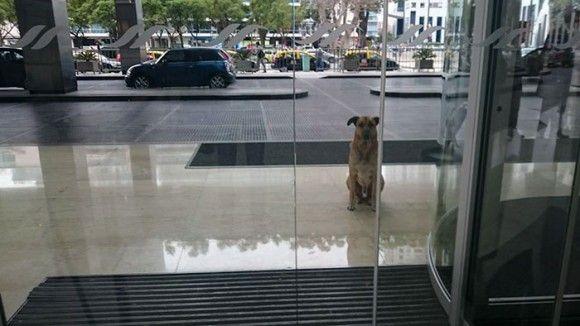 犬 ペット アルゼンチンに関連した画像-01