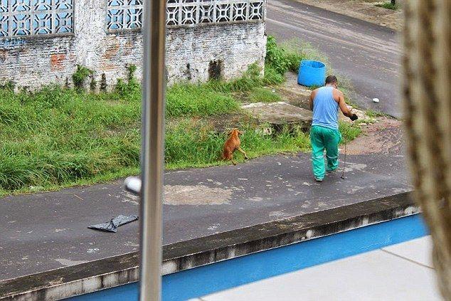 清掃車 犬に関連した画像-03