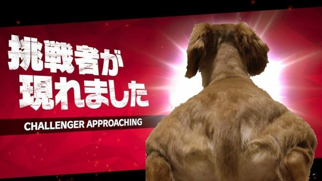 犬 肩幅 ムキムキ 写真 錯覚に関連した画像-05
