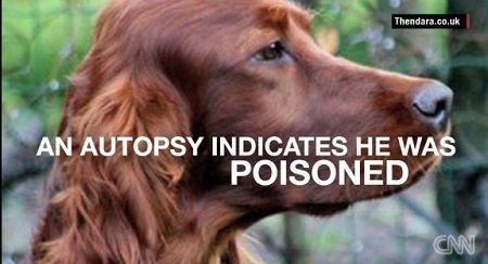 犬 ドッグショー 死亡 毒 イギリス イングランド バーミンガム ベルギー アイリッシュセッターに関連した画像-01
