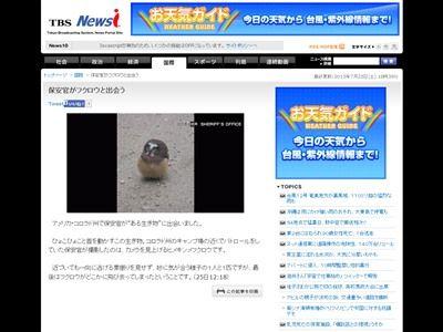 フクロウ 警察 事情聴取 保安官 梟に関連した画像-04
