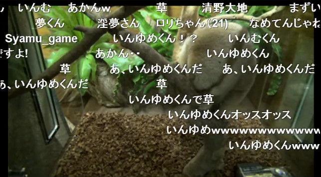 淫夢くん ニコニコ公式 スローロリス ニコニコ生放送に関連した画像-03