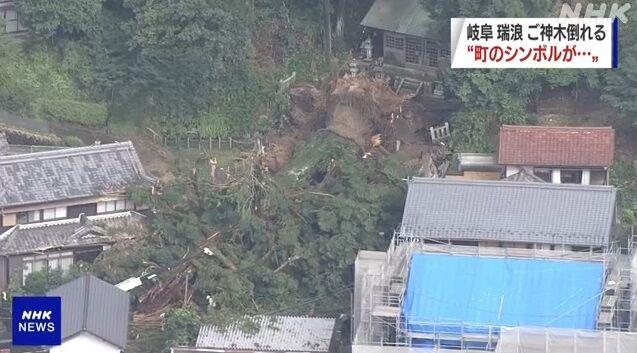 岐阜県 ご神木 倒壊 に関連した画像-03