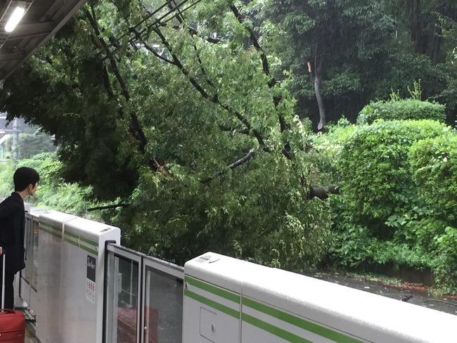 原宿駅 倒木 駅 木 山手線 台風に関連した画像-03
