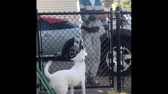 全盲 犬 感動に関連した画像-06