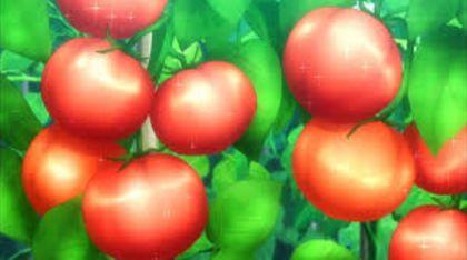 サラダ 野菜に関連した画像-01