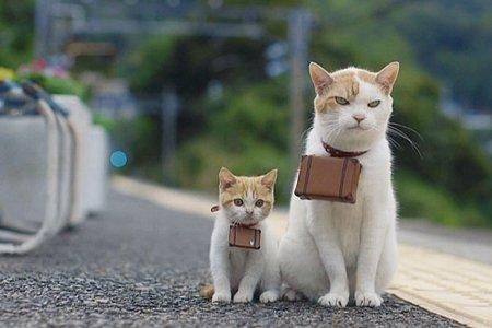 猫 180kmに関連した画像-01