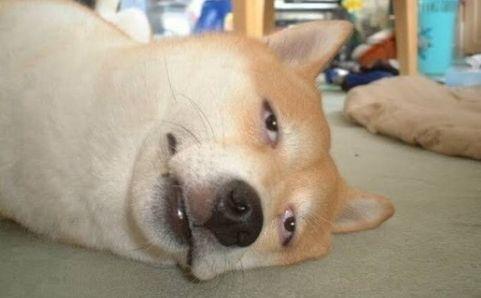 熱中症 ペット 犬 猫 体温調整に関連した画像-01