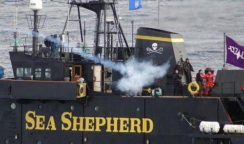 シー・シェパード 捕鯨妨害 日本に関連した画像-01