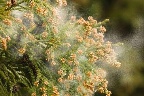 花粉 東京 飛散 去年に関連した画像-01