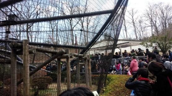 けものフレンズ サーバルちゃん 動物園に関連した画像-04