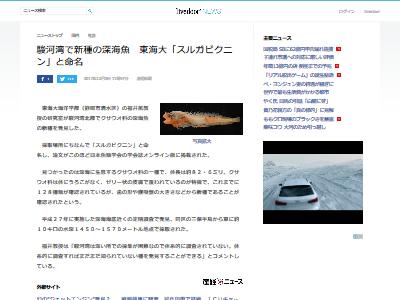 駿河湾 スルガビクニン 深海魚に関連した画像-02