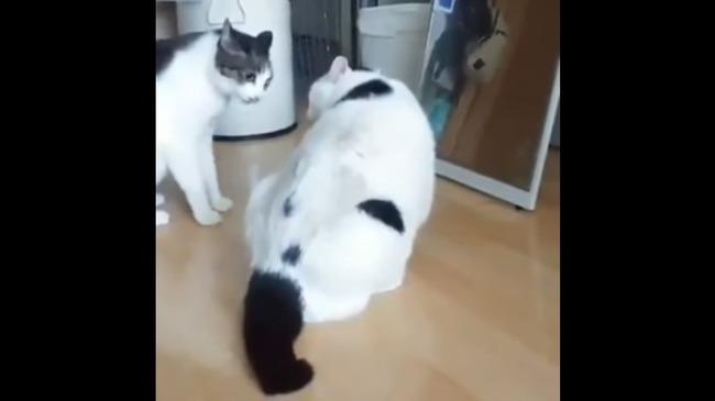 猫 喧嘩 仲裁に関連した画像-02