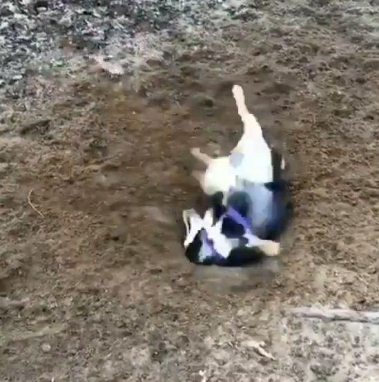 犬 穴掘り テンションに関連した画像-04