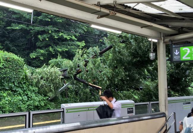 原宿駅 倒木 駅 木 山手線 台風に関連した画像-08