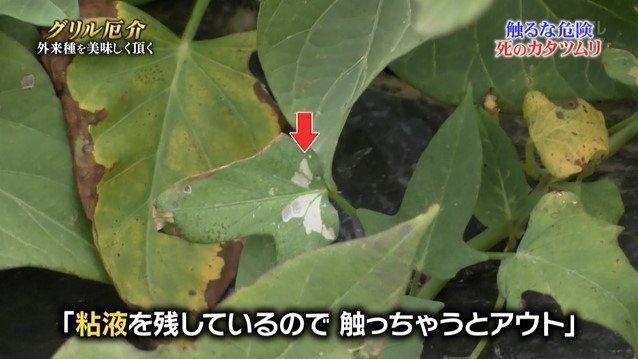 TOKIO カタツムリ 鉄腕ダッシュに関連した画像-05
