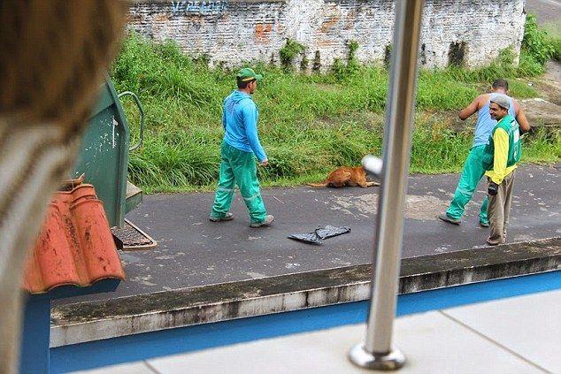 清掃車 犬に関連した画像-04