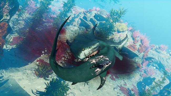 サメゲームManeater配信開始に関連した画像-04