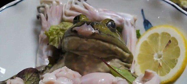 カエルの活き造り 動物虐待に関連した画像-04