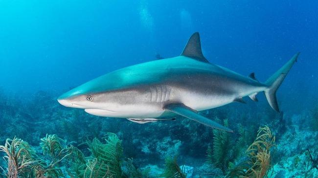 【朗報】最新のサメ映画、ついにチェーンソーを持ったサメが二足歩行で襲ってくるようになる