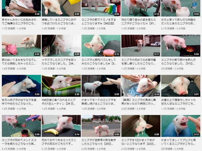 100日目に食われるブタ YouTube チャンネル 100日後 食べる 丸焼き 動画に関連した画像-02