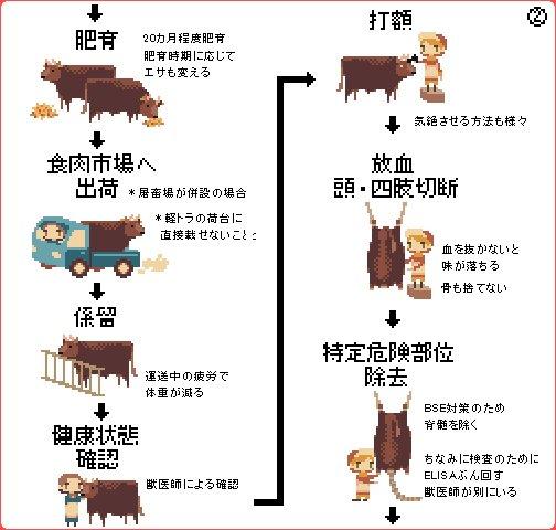 牛肉 牛 飼育 フローに関連した画像-03