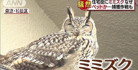 ミミズク TBS 誤報 東京 杉並区 置物 Nスタに関連した画像-01