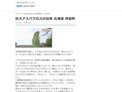 アスパラガス 巨大 北海道に関連した画像-02