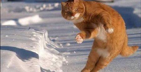 ネコ 穴 脱出 救出 猫 に関連した画像-01